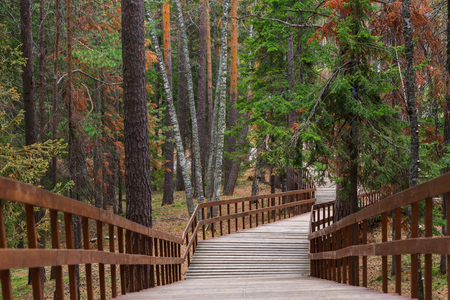 Stair road in a beautiful forest. The concept of the onset of summer.