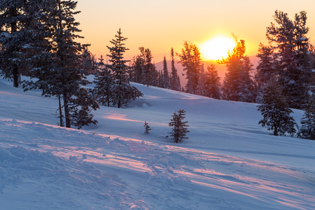 Beautiful sunset in the mountains. Winter landscape with fir trees in the snow.