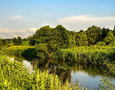 The shore of a small river overgrown with reeds and sedge, summer evening. Beauty