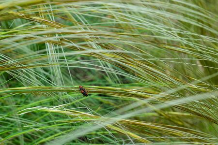 the beautiful Feather Grass bush, forms already at the slightest wind blow an unusual pattern. beautiful spring day. Close-up.