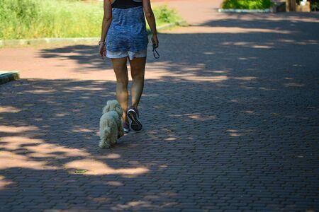 White dogs walk , accompanied by their mistress, on the sidewalk. Stockfoto