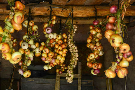 Harvest. Bunches of onions are dried in a barn in the village. Banco de Imagens