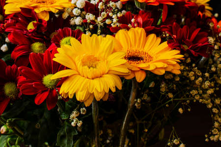 Beautiful bright orange and yellow gerbera flower on the background of other red chrysanthemum flowers, shallow DOF, selective focus on the gerbera petals. Banco de Imagens