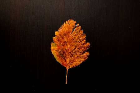 autumn leaf on a tree black background, top view Banco de Imagens