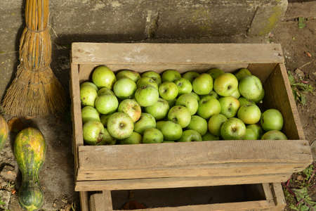 Green apples in wooden box. Harvest concept at the end of the summer season Banco de Imagens