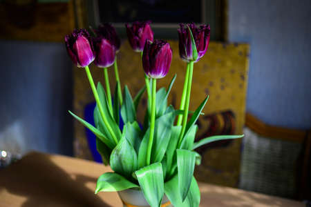 Bouquet of fresh purple tulips in glass vase, flowers beautifully illuminated by the sunlight, blurred background, still life. Banco de Imagens
