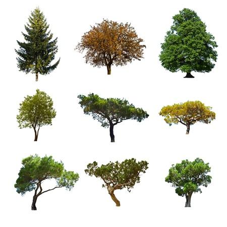 pomme de pin: collection d'arbres isol�s �t� Banque d'images