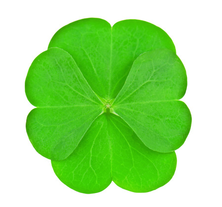 four leaves clover on white Stock Photo - 24293339