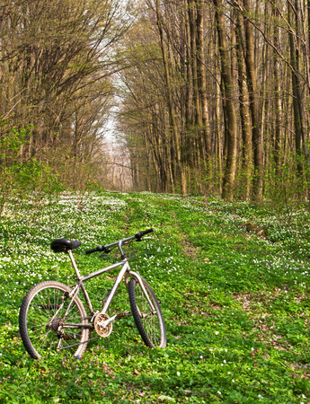 bicycle in wild spring forest photo