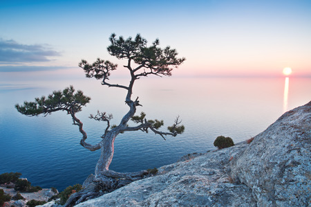 exotic tree on the rock at sunset