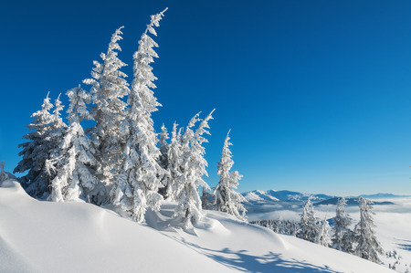 snow-covered firs in winter mountains Stock Photo