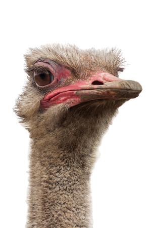ostrich head on white background