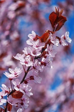 twig: blooming tree twig (plum branch)