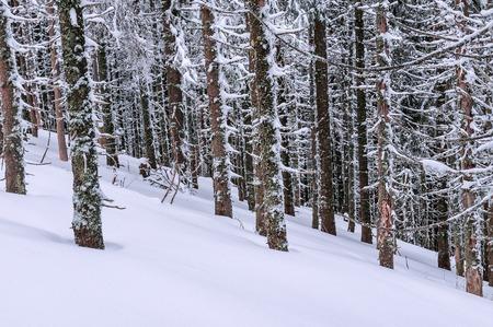 snow in winter frozen forest
