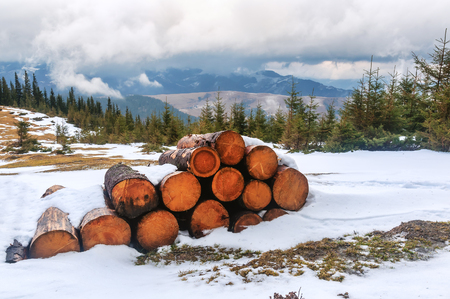 stack of cut tree on the snow in winter mountains
