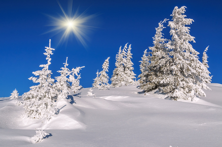 snow-covered firs in winter mountains under the sun and blue sky