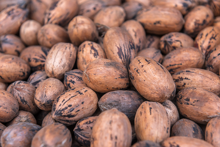 hickory nuts: delicious pecan nuts as a texture