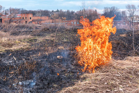 heat loss: dry grass in the field burns inflated by a strong wind. Environment problem