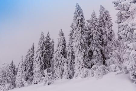 snow covered firs and fog in the mountains Stock Photo