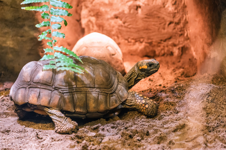 live turtle is warming up in the sand Stock Photo