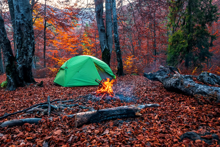 campfire and tent in red autumn forest 版權商用圖片 - 117761649