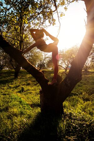 silhouette of yoga girl on the tree on sunset Banque d'images - 126379924