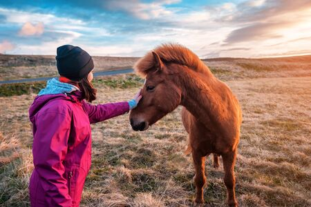 The girl strokes the cute Icelandic horse on sunset Banque d'images - 126378244