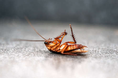 ugly cockroach lies on his back