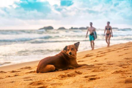 cute dog lying on the tropical beach on sunset