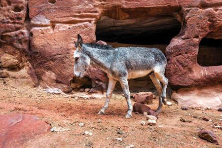 cute donkey among the red rocks