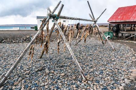 dry fish in fishing village at Iceland 版權商用圖片
