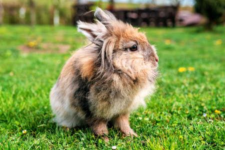 fluffy cute rabbit jn the grass
