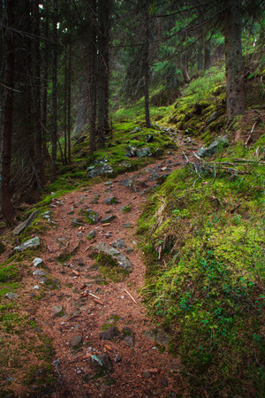 Landscape dense mountain forest and stone path between the roots of trees. Stock fotó