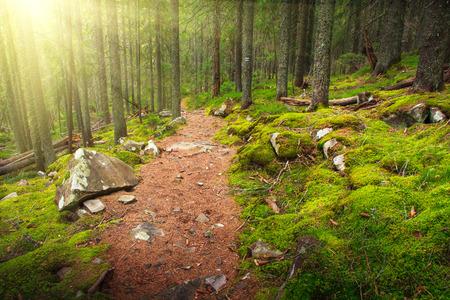 Paisaje denso bosque de montaña y camino de piedra entre las raíces de los árboles. Foto de archivo - 39663340