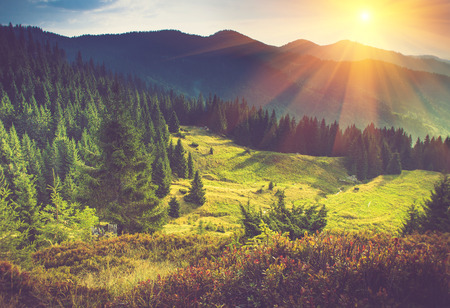 sunrise mountain: Beautiful summer landscape in the mountains at sunshine. Stock Photo