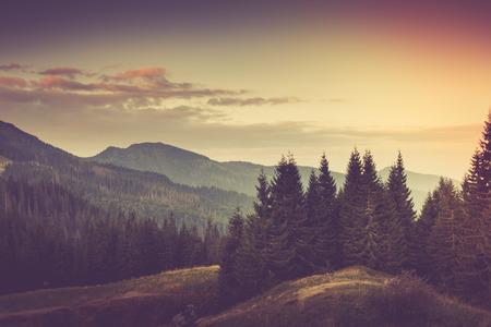 Summer mountain landscape. Standard-Bild
