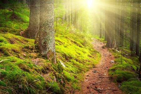 Paisaje denso bosque de montaña y camino de piedra entre las raíces de los árboles en la luz del sol.