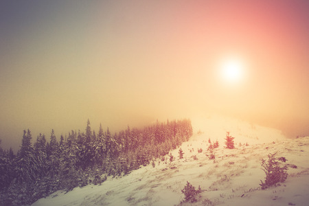 fantastic: Fantastic landscape glowing by sunlight.