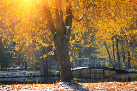 Landscape of autumn park. View of fallen yellow leaves and first snow in sunshine. Collection of nature autumn backgrounds. Banco de Imagens