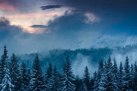 Landscape of the dramatic sunset in the winter mountain. Wooded hills covered with snow, fog rising from valleys, colorful cloudy sky - this is impressive picture.