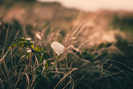 View of closeup on wildflower at sunlight. Beautiful of spring landscape. Vintage photo and selective focus of nature background.