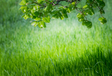 Spring wallpaper. View of close-up green grass at sunlight. Background with copy space. Ecology and nature concept. Selective focus. Foto de archivo - 100671158