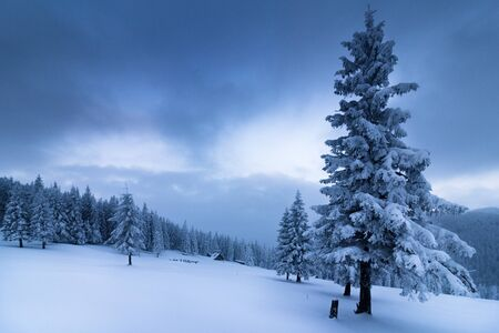 Landscape in winter mountains. View of snow-covered tall firs and impassable snowdrifts. Snow layers lay on the branches of trees. Nature on winter. Stock fotó