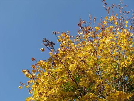 The autumn nature. Maple leaf. Sky. Clouds photo