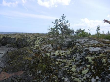 Branch in flight on island of Ladoga lake photo