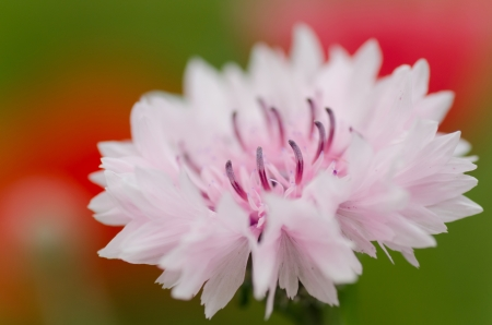 Close up of a pink flower shot with macro lens.