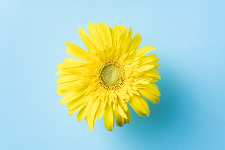 top view of yellow sunflower on blue background