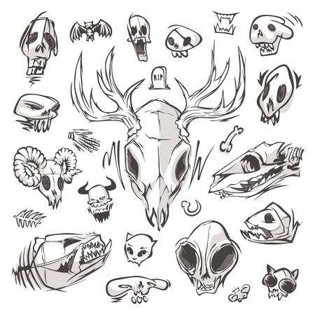 Diverse Skulls and Bones Set
