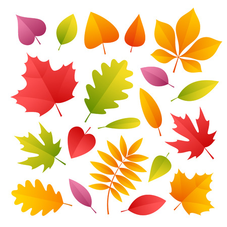 Set of Colorful Autumn Leaves. Isolated on white background. Clipping paths included in JPG file. Иллюстрация