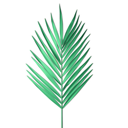 Tropisch palmblad dat op witte achtergrond wordt geïsoleerd. Palm varenblad Vector illustratie.